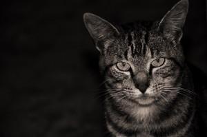 Gato | mementōs