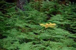bosque | mementōs